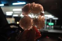 Flores quaisquer :)
